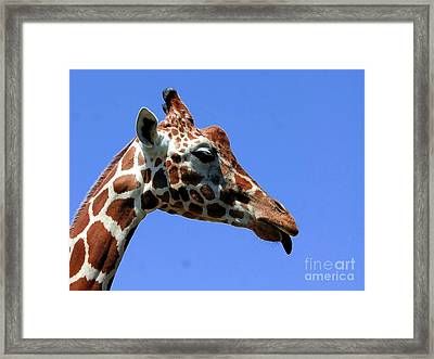Kiss Me Baby Framed Print by Kathleen Struckle