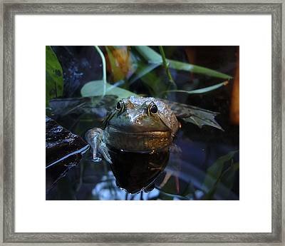 Framed Print featuring the photograph Kiss Me Quickly by Rhonda McDougall