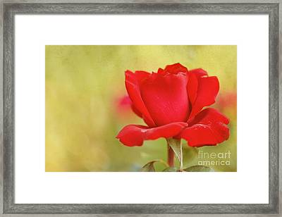 Kiss Me Framed Print by Beve Brown-Clark Photography