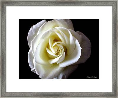 Kiss Of A Rose Framed Print