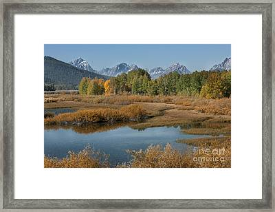 Kiss Of Fall In The Grand Tetons Framed Print by Sandra Bronstein
