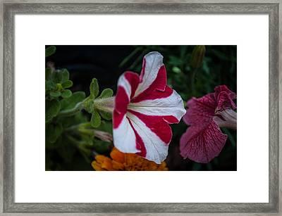 Kiss Of Red Framed Print by Joe Scott