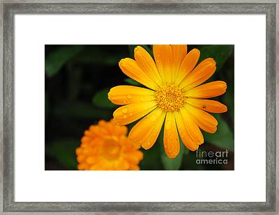 Kissed By Nature Framed Print by Susan Hernandez