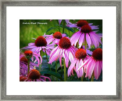 Kissed By Sunlight Framed Print