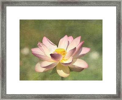 Kissed By The Sun - Lotus Flower Framed Print