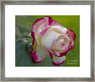 Kissed With Red Framed Print by Nick  Boren