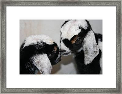 Kisses Framed Print by Kathy Peltomaa Lewis