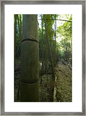 Kissing Bamboo Framed Print by Aaron Bedell
