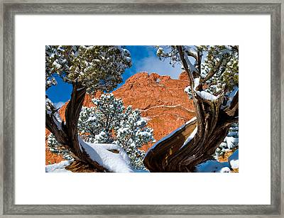 Kissing Camels  Framed Print