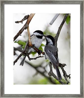 Kissing Chickadees Framed Print