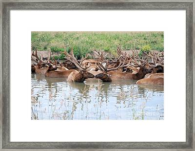 Kissing Elk Framed Print by Mark McReynolds