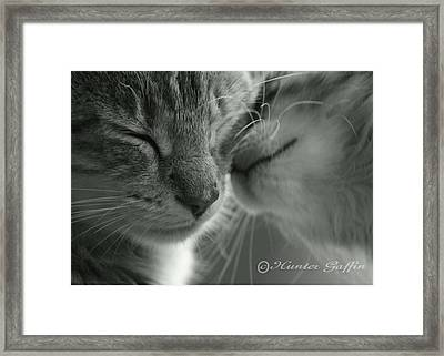 Kissing Kittys Framed Print by Hunter Gaffin