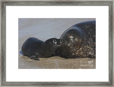 Kissing Seals Framed Print by Ruth Jolly