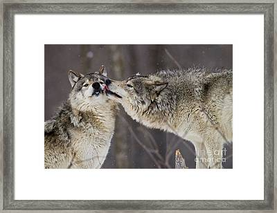 Kissy Face Framed Print