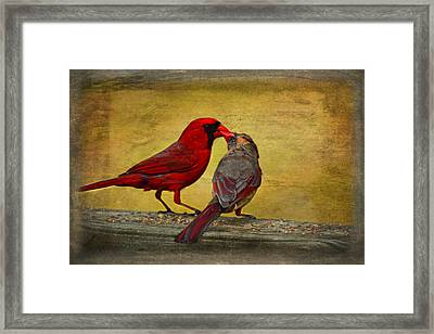 Kissy Kissy Birds Framed Print