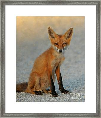 Framed Print featuring the photograph Kit by Olivia Hardwicke