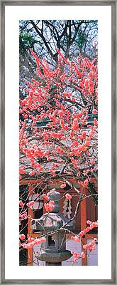 Kitano-tenmangu Kyoto Japan Framed Print by Panoramic Images
