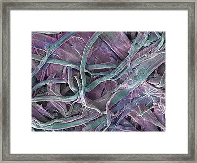 Kitchen Paper Towel, Sem Framed Print by Power And Syred
