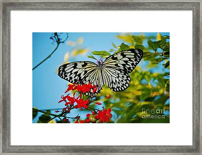 Framed Print featuring the photograph Kite Butterfly by Peggy Franz