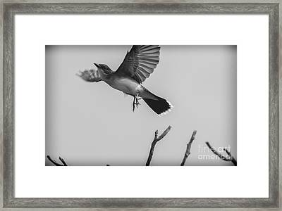 Kite... Framed Print
