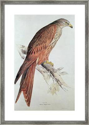Kite Framed Print