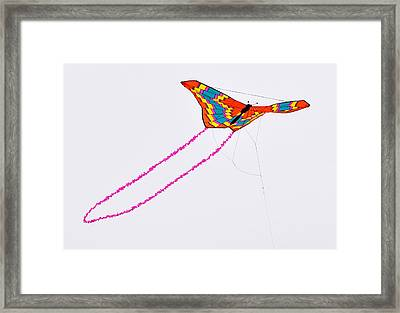 Kite With Pink Tail Framed Print by Michael Bruce