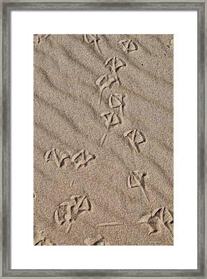 Kites Framed Print by Bruce Wilbur