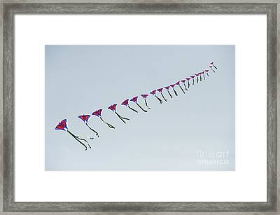 Kites In China Framed Print by John Shaw