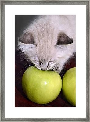 Kitten And An Apple Framed Print by Susan Leggett