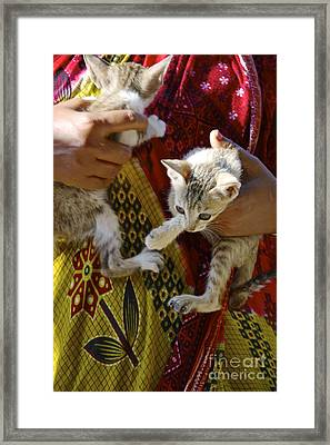 Kitten Framed Print by Bobby Mandal