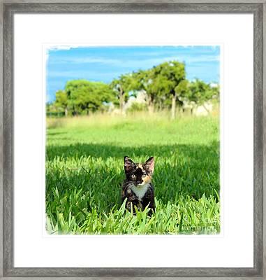 Framed Print featuring the photograph Kitten by Carsten Reisinger