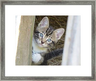Kitten Framed Print by Diane Mitchell