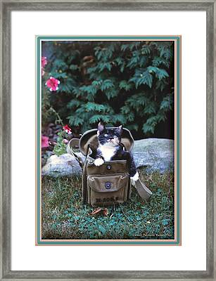 Kitten In A Canvas Bag Framed Print by Patricia Keller