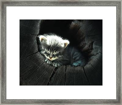 Kitten In A Log Framed Print by June Jacobsen