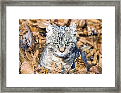 Framed Print featuring the photograph Kitten In Leaves by Susan Leggett
