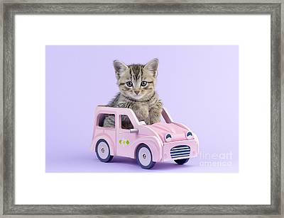 Kitten In Pink Car  Framed Print