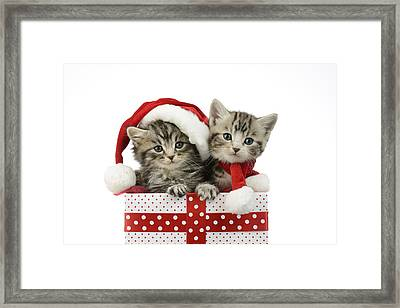 Kitten In Presents Framed Print