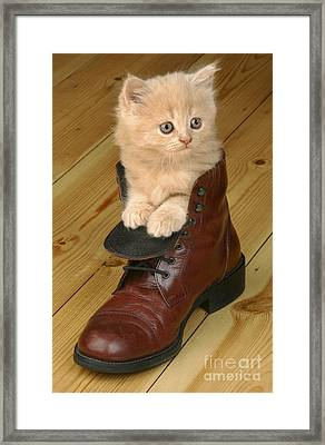 Kitten In Shoe Ck181 Framed Print by Greg Cuddiford