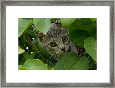 Kitten In The Bushes Framed Print by Scott Lyons