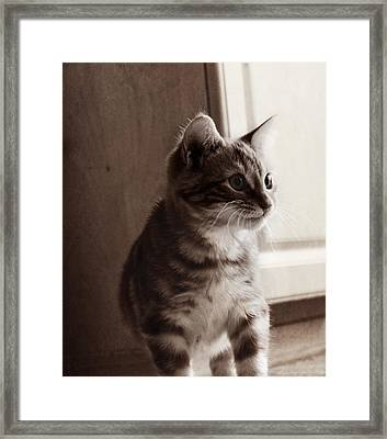 Kitten In The Light Framed Print by Melanie Lankford Photography