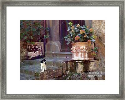 Kitten Italiano Framed Print by Barbie Corbett-Newmin