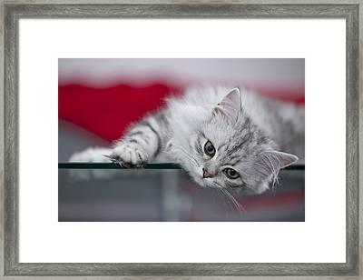 Kitten Framed Print by Melanie Viola