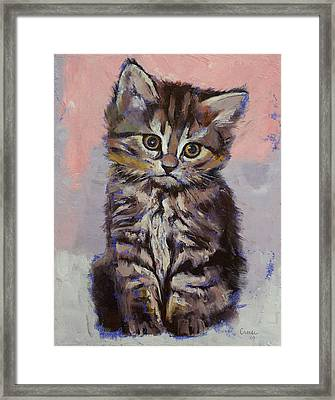Kitten Framed Print by Michael Creese