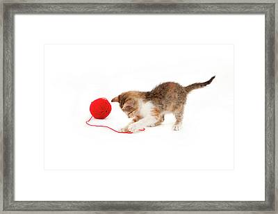 Kitten Playing With A Ball Of Red Wool Framed Print by By Kerstin Claudia