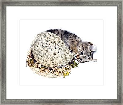 Framed Print featuring the photograph Kitten With An Easter Bonnet by Susan Leggett