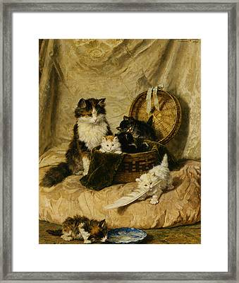 Kittens At Play Framed Print by Henriette Ronner Knip