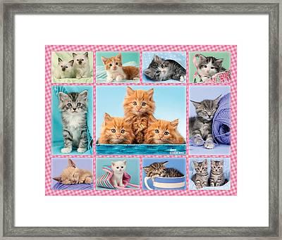 Kittens Gingham Multipic Framed Print by Greg Cuddiford