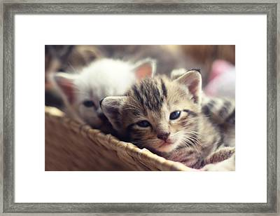 Kittens In A Basket Framed Print by Amy Tyler