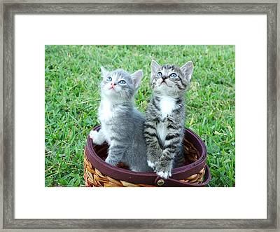 Kittens Framed Print by Pavlo Kuzyk