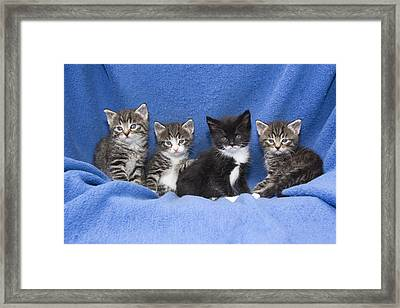 Kittens Sitting On Blanket Framed Print by Duncan Usher
